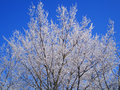 Free Hoarfrost On Trees Stock Images - 16393784