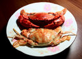Free Cooked Crab Stock Photography - 16399682