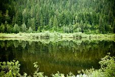 Free Trees Reflection In The Water. Royalty Free Stock Image - 16390886