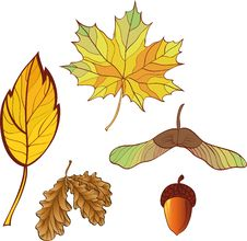 A Set Of Autumn Leaves Stock Photos