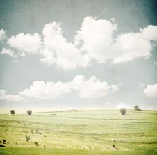 Free Green Field And Blue Sky Royalty Free Stock Photos - 16395048