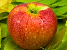 Free One Apple On Foliage Stock Images - 16395114