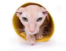 Free Cat Stock Photo - 16395230