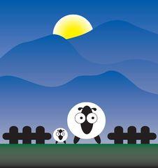 Free Sheep Royalty Free Stock Photo - 16395285