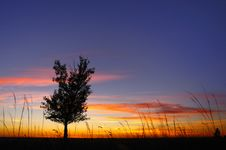 Free Sunset And Tree Stock Photography - 16396782