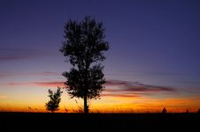 Free Sunset And Tree Royalty Free Stock Images - 16396849