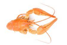 Free Crayfish Stock Photo - 16397410