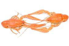 Free Crayfish Stock Photography - 16397422