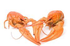 Free Crayfish Stock Photo - 16397430