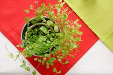 Free Plant In A Metal Pot Stock Photography - 16397952