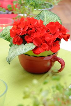 Free Bouquet Of Geranium With Green Leaves Stock Photos - 16398343