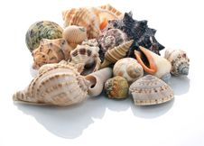 Free Conch Shells Stock Images - 16399354