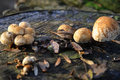 Free Mushrooms On Stump Stock Image - 1645241