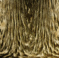 Free Crust Tree Background Stock Photos - 1648133