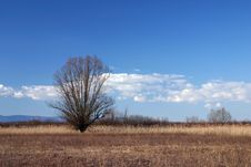 Free Lonely Tree On Meadow Royalty Free Stock Photos - 1641518