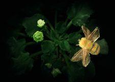 Free Bumblebee Stock Photos - 1641873