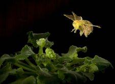Free Bumblebee Royalty Free Stock Photos - 1641878
