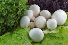 Free Salad Stock Photography - 1642922