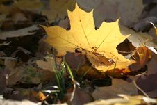 Free Autumn Yellow Stock Photography - 1642952