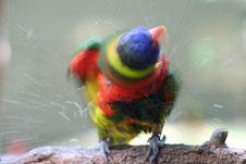 Free Little Bird Royalty Free Stock Photo - 1643375
