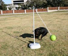 Free Rottweiler Tetherball Stock Photo - 1643730