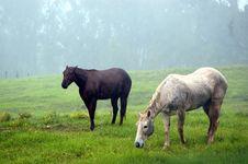 Free Gazing Horses Stock Photo - 1643960