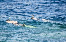 Two Snorkeling Person In Coastal Waters Stock Images