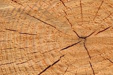Free Tree Rings Mark Time Passage Stock Image - 1645771