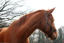 Free Pferd Horse Royalty Free Stock Images - 1645809