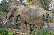 Free Elephant 6 Royalty Free Stock Photo - 1646175