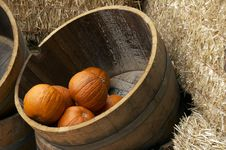 Free Pumpkin In A Barrel Royalty Free Stock Photography - 1646587