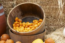 Free Pumpkin In A Barrel Royalty Free Stock Photography - 1646597