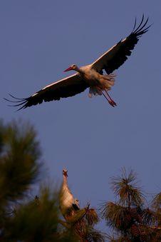 Free Wild Stork Stock Photo - 1647370
