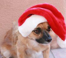 Free Holiday Hound Stock Image - 1647891