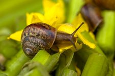 Free Snail And Water Lily Royalty Free Stock Image - 1648876