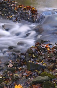 Autumn Leaves In Creek Stock Photo