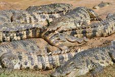 Free Crocodiles Everywhere Stock Photos - 1649283