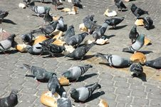 Free Pigeons On The Square Stock Photography - 1649852