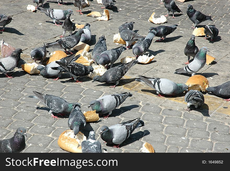 Pigeons on the square