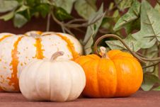 Free Pumpkin Patch Stock Photo - 16400310