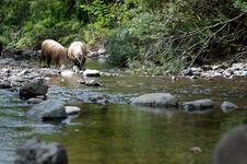 Free Flock Of Sheep Near A Stream Stock Photo - 16400440