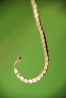 Free The Hook Royalty Free Stock Photo - 16400625