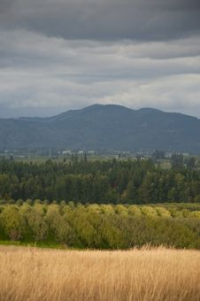 Free Landscape With Apple Orchard Royalty Free Stock Photos - 16400758
