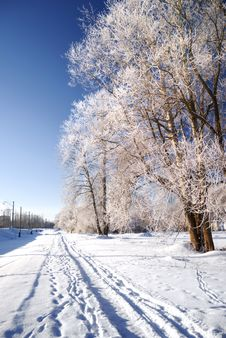 Free Frost On Tree Stock Images - 16401224