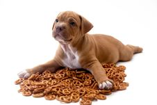 Free Puppy And Pretzels Stock Photography - 16403972
