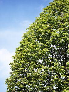 Free Tree Sky Balance Royalty Free Stock Image - 16404196