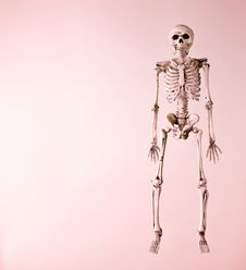 Free Skeleton On A Red Background Royalty Free Stock Photography - 16405617
