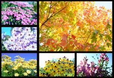 Free Flowers And Trees Autumn Stock Images - 16405694