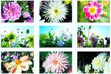 Free Flowers Autumn Royalty Free Stock Image - 16405786