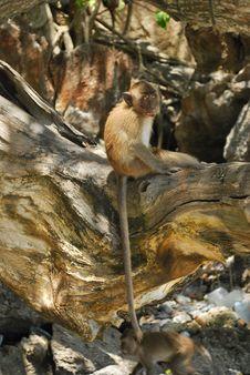 Free Baby Monkey Stock Image - 16407441